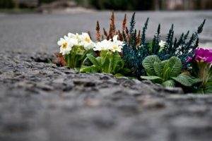 pothole_garden_01-by-Pete-Dungey