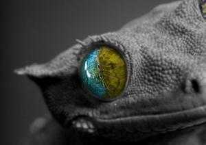 occhio Lucertola